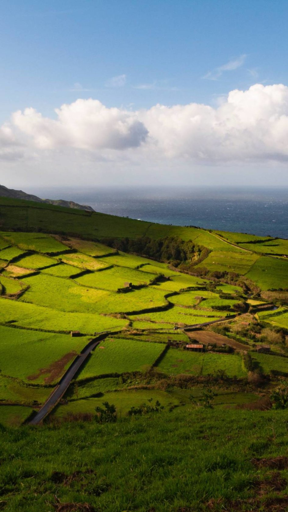 A landscape shot of the vineyards on the Azores island Pico